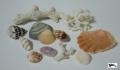 貝殻 写真サイン