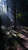 20150726原生の森27