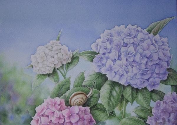紫陽花 1506