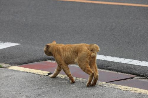 茶色の猫 5