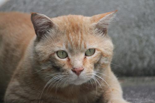 茶色の猫 4