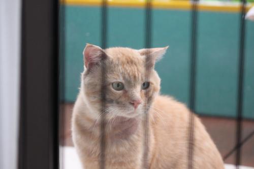 茶色の猫 2