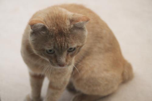 茶色の猫 1