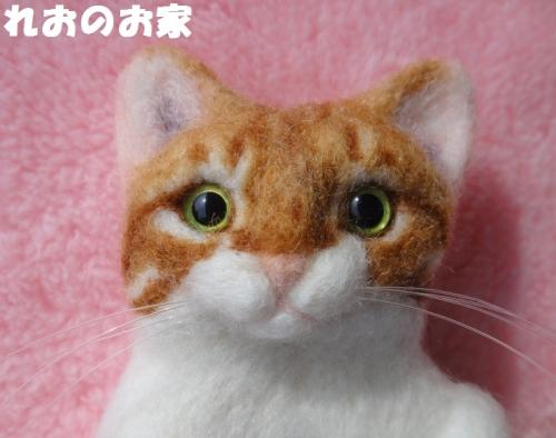 茶白ちゃん4