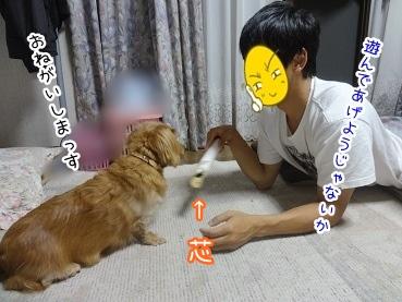 kinako2875.jpg