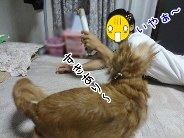 kinako2879.jpg