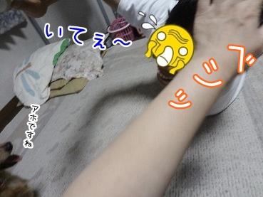 kinako2883.jpg