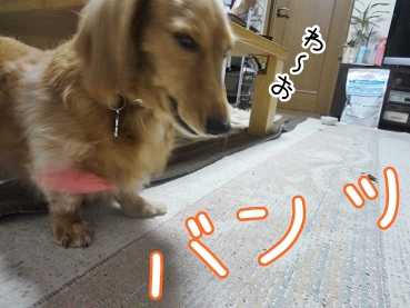 kinako2891.jpg