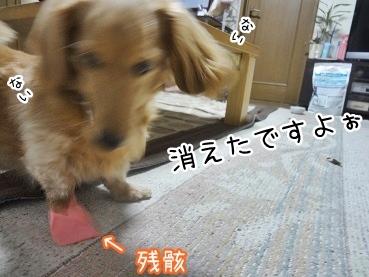kinako2892.jpg