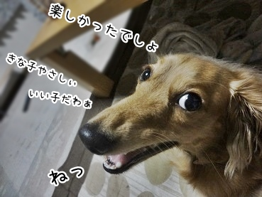 kinako2899.jpg