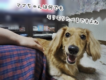 kinako2903.jpg