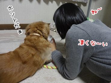 kinako2913.jpg