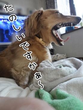 kinako2927.jpg