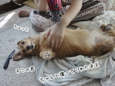 kinako2946.jpg