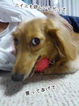 kinako2956.jpg