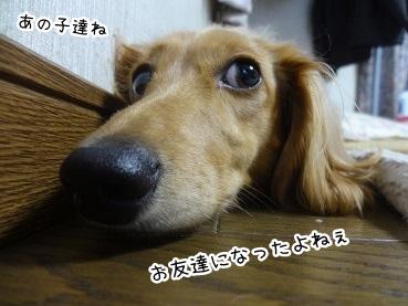 kinako2958.jpg