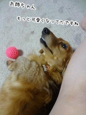 kinako2970.jpg