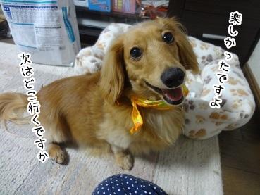 kinako2978.jpg