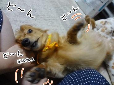 kinako2979.jpg