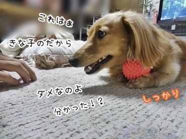 kinako2986.jpg