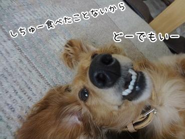 kinako2990.jpg