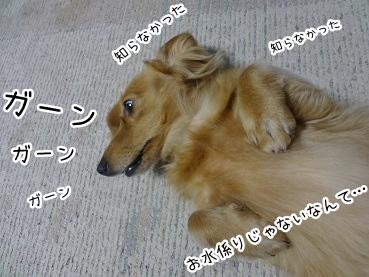 kinako2997.jpg