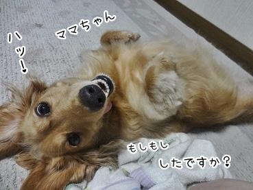 kinako3007.jpg