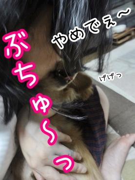 kinako3023.jpg