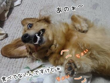 kinako3029.jpg