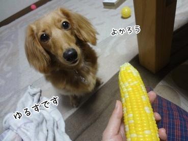 kinako3032.jpg