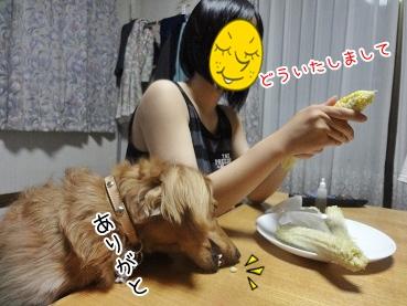 kinako3038.jpg