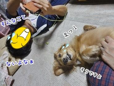 kinako3043.jpg