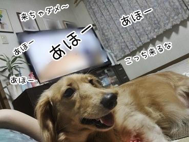 kinako3053.jpg