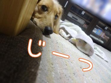 kinako3056.jpg