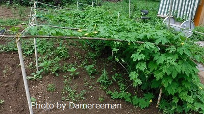 2015.7.17菜園42