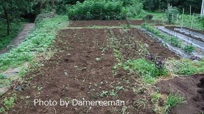 2015.7.17菜園49