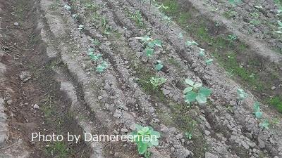 2015.8.1菜園8