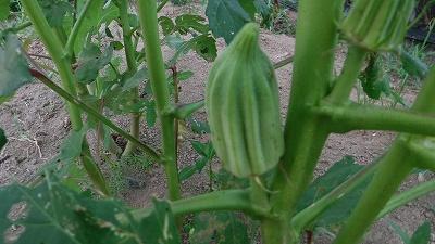 2015.8.7菜園2