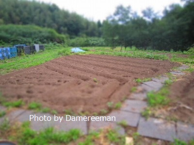 2015.5.23菜園