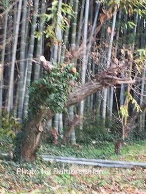 2014.12.27竹山11