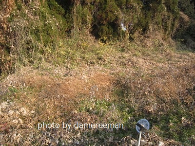 2014.12.29開墾地9