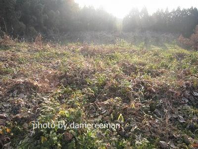 2014.12.29開墾地10