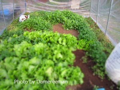 2014.12.29菜園4