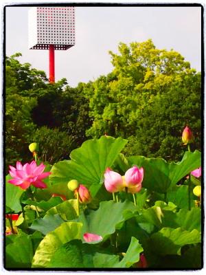 知らない人には全然わからない写真でゴメンナサイ。うしろの塔みたいなものは万博当時のものです。このずっと右側には太陽の塔のオッサンがいます。