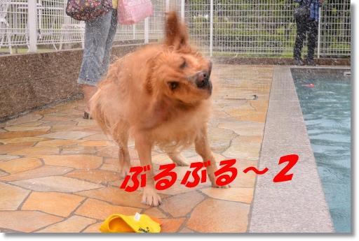 DSC_7499.jpg