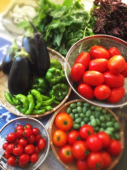 畑の野菜も夏野菜のピーク!