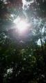 林の中の陽射し