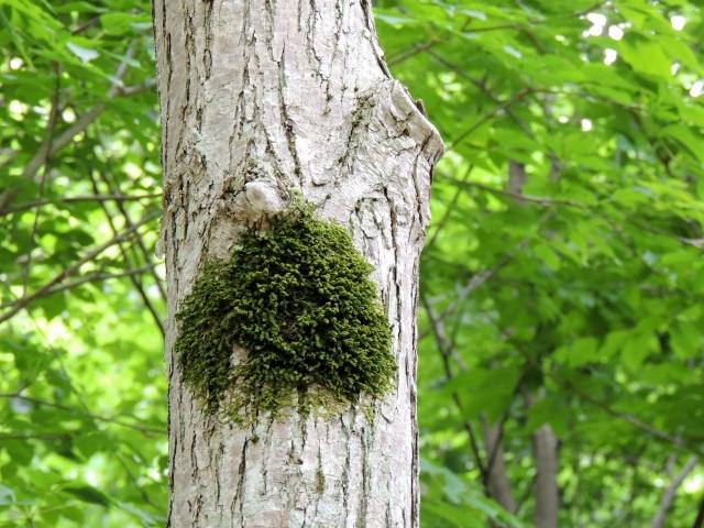 N6250樹の共生