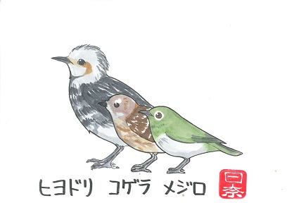 ヒヨドリコゲラメジロ