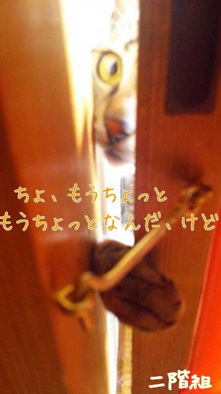 lpokaPtKvDSVm8t1438405351_1438405553.jpg